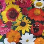 Planting flowers guerrilla gardening style