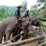 Thailand (7) An elephant ride