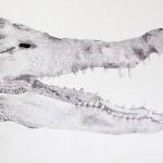 Past Project: Crocodile pen drawing