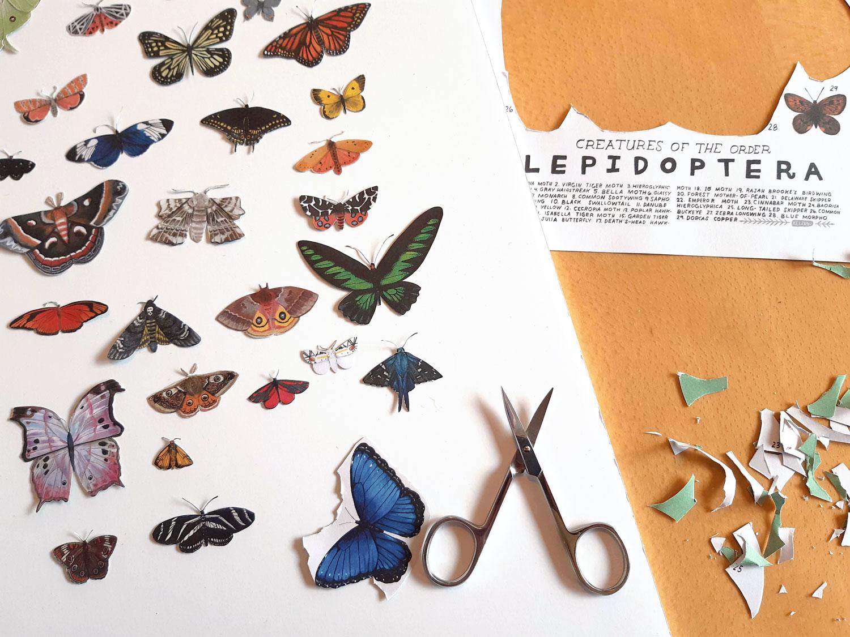faux taxidermy butterflies
